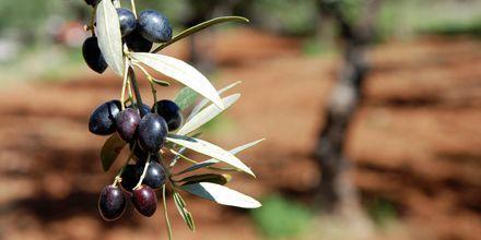 Oliven fra Kalamata