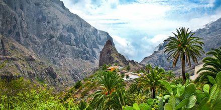 En fottur i Mascadalen på Tenerife er en flott opplevelse