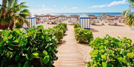 Strand på Tenerife