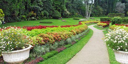Den botaniske hagen Peradanyia i Kandy