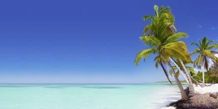 Reiser Til Karibien Og Nord Amerika Se Reisemal Hos Apollo