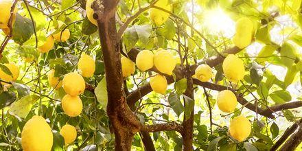 Lokal frukt på Kefalonia i Hellas.