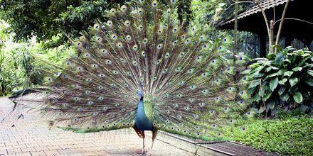 Kuala Lumpur har en fuglepark med 200 arter og 3000 fugler.