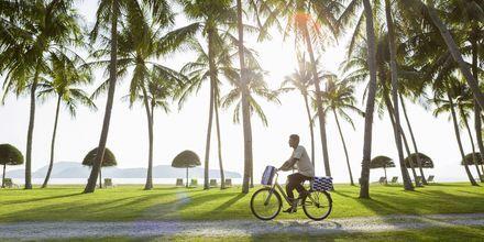Lei en sykkel og dra på en herlig sykkeltur langs Cenang Beach.