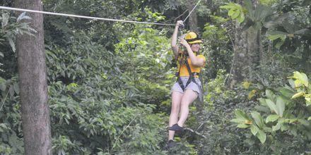 Fly over tretoppene i en av verdens eldste regnskoger med Umgawa Zipline Eco Adventures på Langkawi.