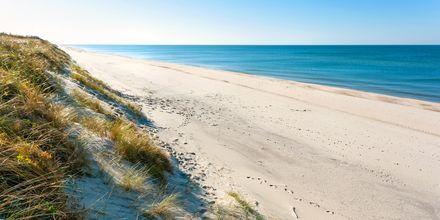 Sandstrand ved Den kuriske landtunge i Litauen.