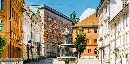 Torg i Ljubljana i Slovenia.