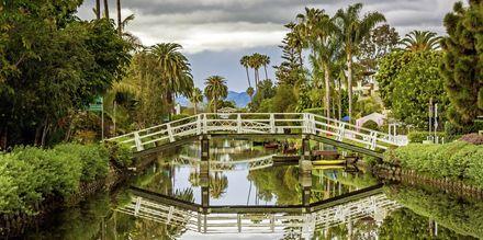 Venice Beach er et spennende, morsomt og sjarmerende område i Los Angeles.