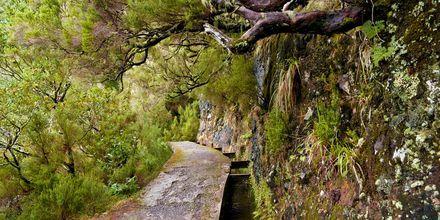 Levadavandringer er populært på Madeira