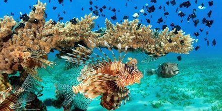 Hele landet består av øyer og korallrev, hvilket gjør dykkingen helt fantastisk.