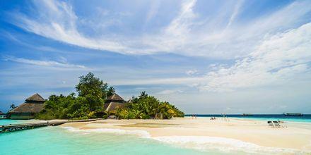 Maldivene er helt perfekt! Spesielt for deg som elsker sol, bad og hvite strender.