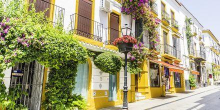 Hvite hus kledd med blomster i Marbella, Spania.