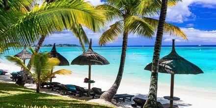 Svaiende palmer skaper skygge på de vakre strendene på Mauritius.