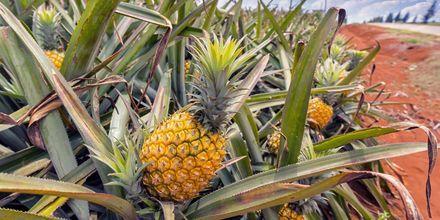 på Mauritius vokser det en mindre type ananas.