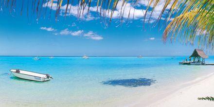 Hvite paradisstrender og det klareste vannet på Mauritius.