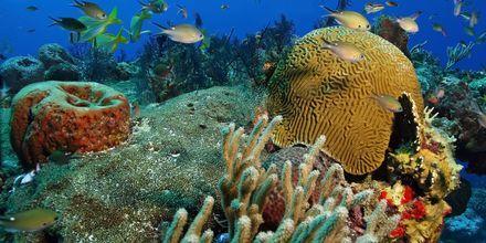 Dykking ved Cozumel