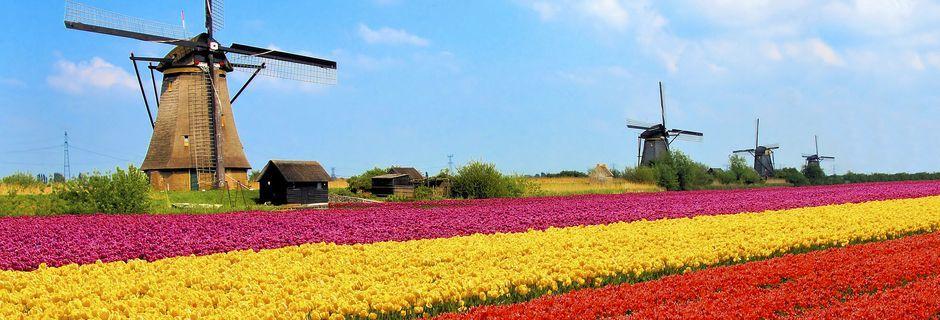 Tulipaner og vindmøller er typiske symbol på Nederland