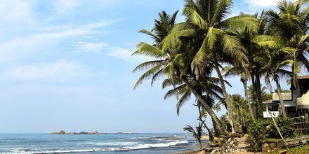 Stranden i Negombo