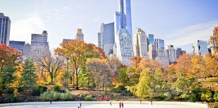 Skøytebane i Central Park