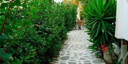 Oasis (Karpathos)