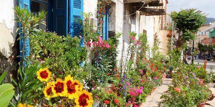 Blomstrende omgivelser langs hovedgata i Paleochora på Kreta