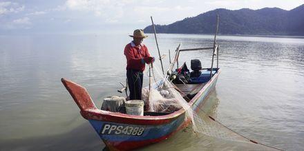 Bli med på eksotisk båttur i mangroveskogene.