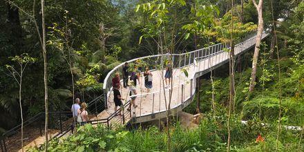 The Habitat på Penang Hill. Her vandrer du i regnskogen og ser på dyreliv og planter.