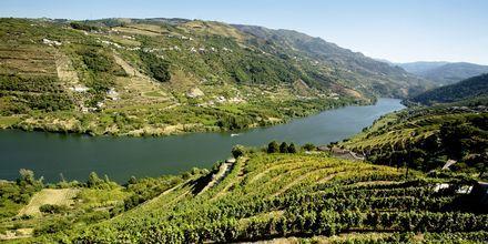 Vinmarkene i Dourodalen