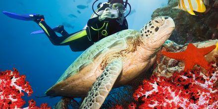 Dykking i Rødehavet