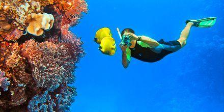 Enestående koraller i Rødehavet