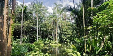"""Singapores botaniske hage er """"et must"""" for den som er interessert i vekster."""