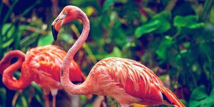 Singapore Zoo er verdenskjent.