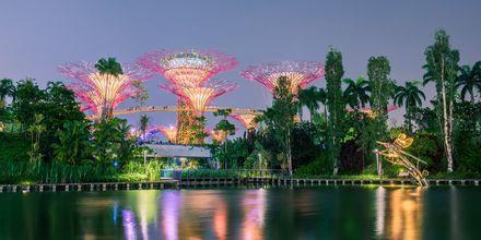 Garden By the Bay på kvelden – med sine enorme menneskeskapte trær