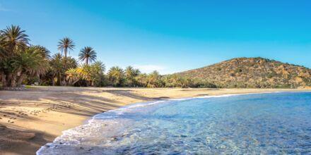 Stranden Vai som ligger ca. 2 mil nordøst for Sitia