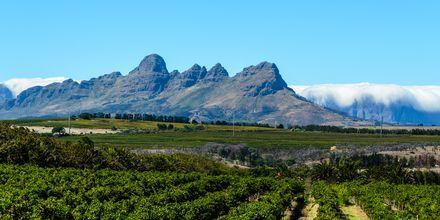 Sør-Afrika – Vinmarker i Stellenbosch