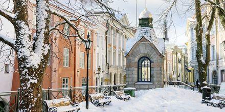 Tallinn er superkoselig – også på vinteren.