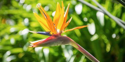 Det deilige klimaet er perfekt for fargerike blomster