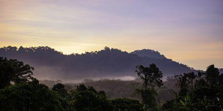 Thalang ligger i Phukets jungel