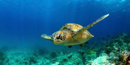 Tobagos fine undervannsverden