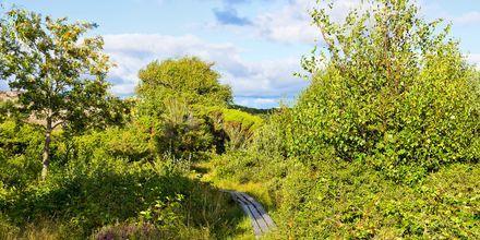 Naturen i Varberg er vakker og passer perfekt for turer til fots og på sykkel
