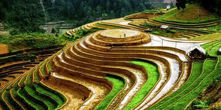 De karakteristiske risterrassene i Vietnam