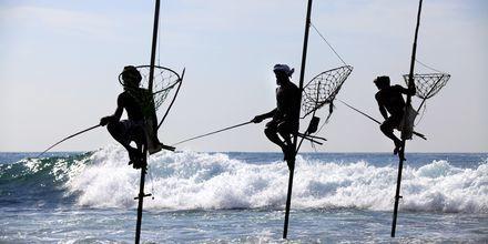 Den berømte fiskemetoden, ritipanna