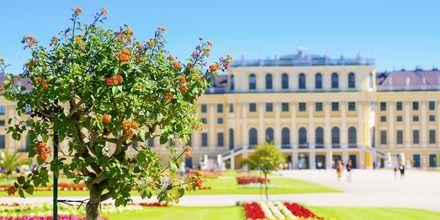 I Wien finnes det mange pampete bygninger og slott. Her ser du litt av Schönbrunn slott.