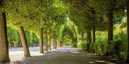 En vakker parkallé i Wien, Østerrike.