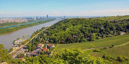 Nære Wien finnes det 11 flotte vandringsruter. Her fra Leopoldsberg der du har en fantastisk utsikt over storbyen.