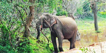 Elefant i nasjonalparken