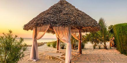 Zanzibar i Tanzania, Afrika.